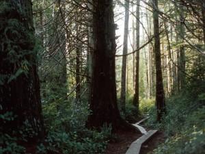 Camino marcado en un bosque