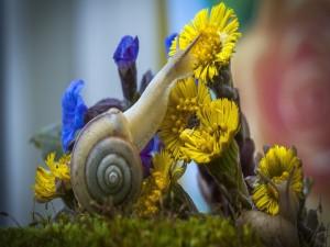 Caracoles junto a unas flores