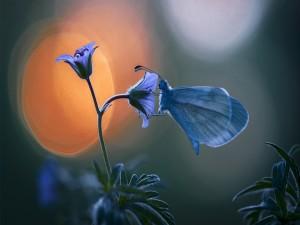 Mariposa azul posada sobre una flor lila