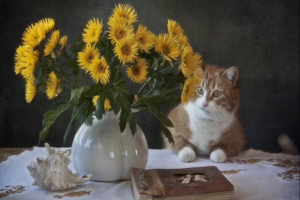 Gato observando un florero con flores amarillas