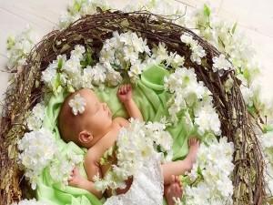 Bebé durmiendo en un nido con flores blancas