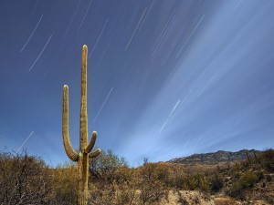 Hermoso cielo sobre un cactus gigante