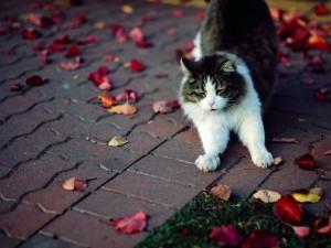 Gato estirando sus patas
