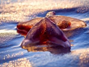 Estrella de mar arrastrada por la marea