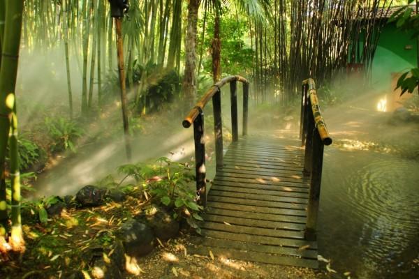 Puente de madera en un bosque de bambú