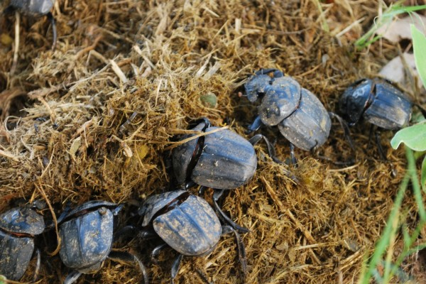 Varios escarabajos
