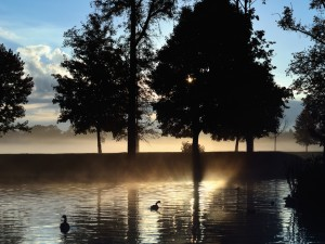 Dos patos en un lago al amanecer