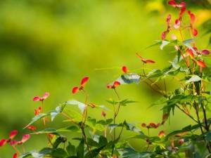 Ramas con hojas y flores