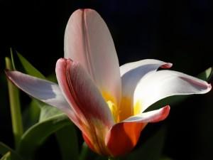 Reluciente flor en fondo negro