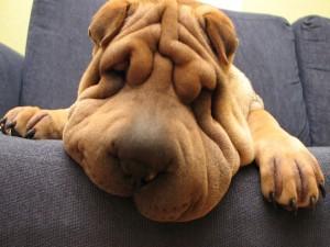 Un perro dormido en el sofá