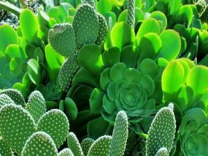 Verdes cactus en un jardín