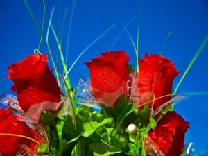 Rosas de tela bajo un cielo azul