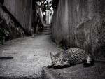 Gato tumbado en el suelo de una estrecha calle