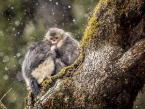 Dos monos acurrucados bajo la nieve