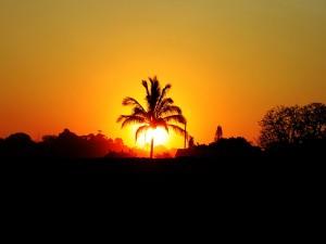 Gran sol tras una palmera
