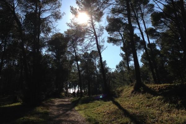 Sol brillando sobre los árboles del bosque