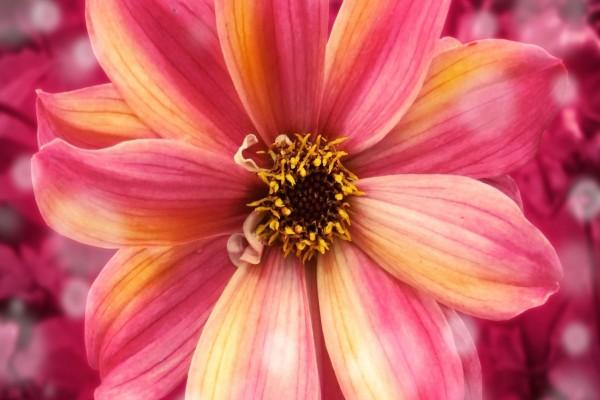 Una gran flor con bonitos pétalos