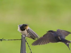 Pájaro enojado