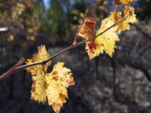 Rama con algunas hojas otoñales