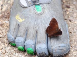 Mariposa posada en un pie