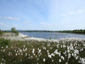 Hermosas flores blancas junto a un lago
