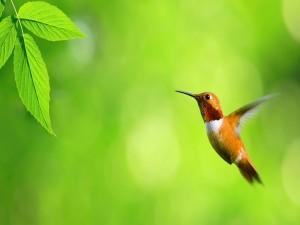 Un bonito colibrí junto a unas hojas verdes