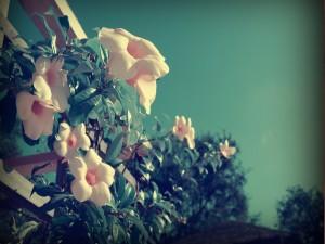 Flores rosas creciendo en un arbusto