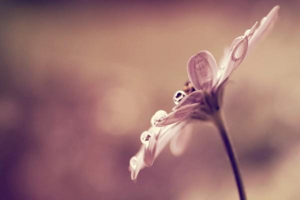 Gotitas de agua en los pétalos de una flor