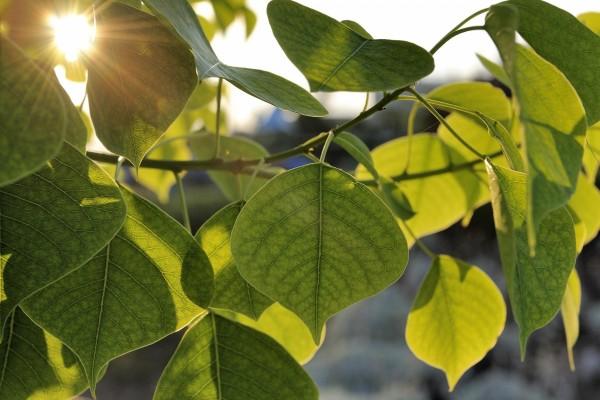 Sol iluminando unas bonitas hojas verdes
