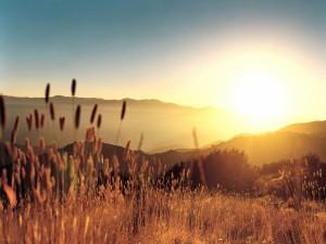 Radiante sol de verano