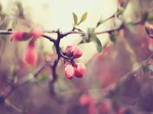 Brotes de flor en una rama