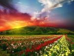 Un hermoso cielo sobre un campo de rosas