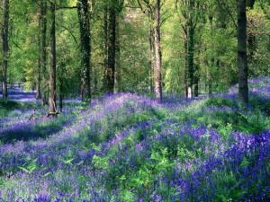 Flores entre los árboles de un bosque