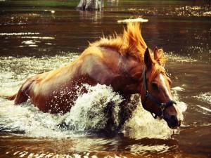 Caballo dentro del agua