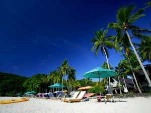 Palmeras y tumbonas en una playa