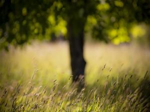 Hierbas en verano