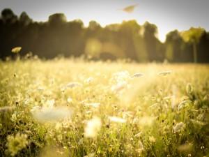 Campo de flores iluminado por el sol