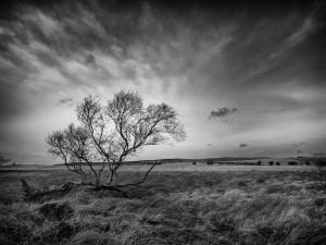 Campo en blanco y negro