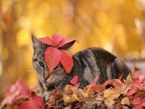 Gato jugando con las hojas otoñales