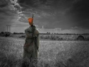 Espantapájaros en un campo de trigo