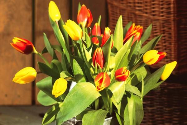 Ramo de tulipanes iluminado