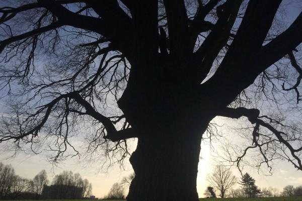 Un árbol sin hojas