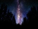 Vía Láctea sobre un pinar