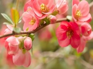 Florecillas rosas en una rama