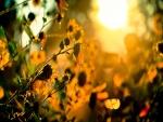 Flores marchitas en verano