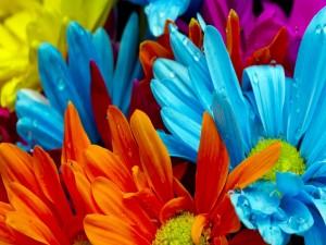 Margaritas de vivos colores