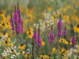 Flores silvestres variadas