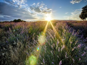 Potentes rayos de sol iluminando un campo