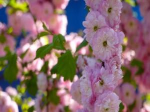 Flores frutales en todo su esplendor