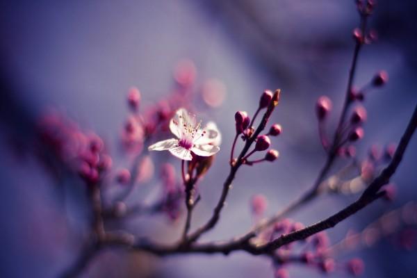 Una flor y brotes en la rama